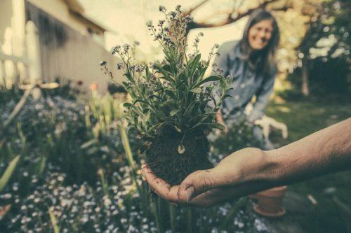 L'entretien d'un jardin et ses vertus sur la santé